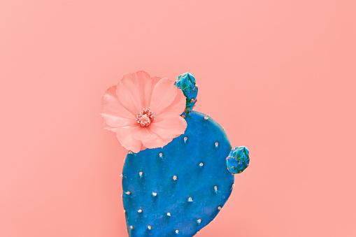 Fashion Coral Cactus pastel color