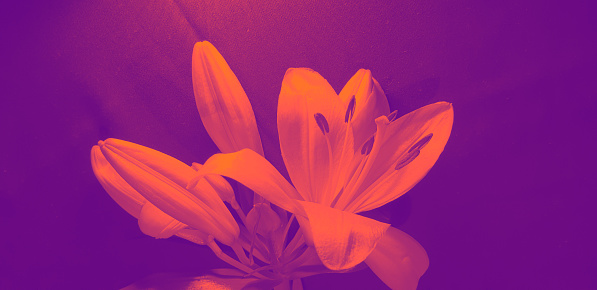 Close up, Purple