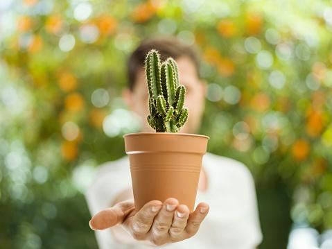 다육식물 키우기