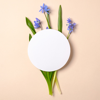 Spring flowers and rounded white blank paper on pastel beige background. Tender creative layout. Spring nature concept. Flat lay style composition. Top view, overhead