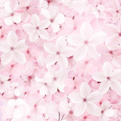 Blossoming pink sakura flowers background. Beautiful print