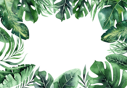 Watercolor tropical plant background