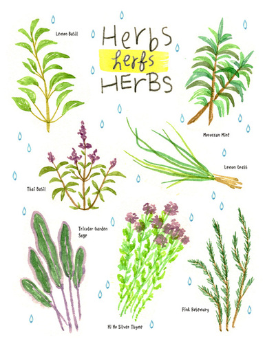 Herb's