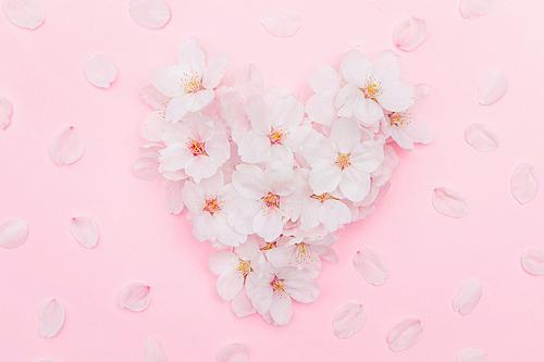 벚꽃 송이