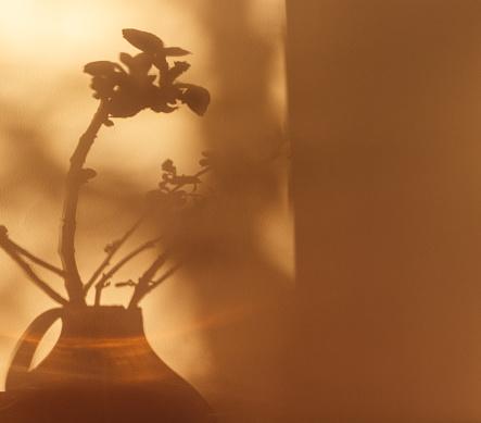 Shadows of plants