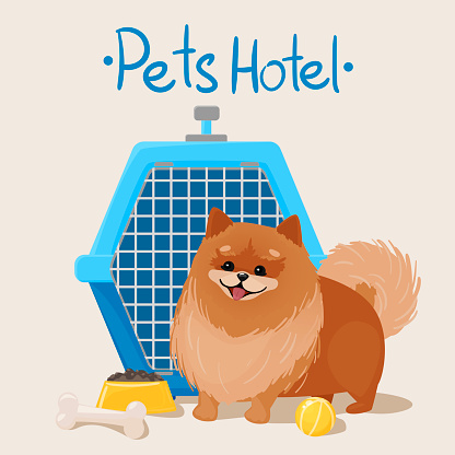 Pet hotel concept. Happy smiling Pomeranian next to the carrier. Food, entertainment for your vacation. vector illustration isolated on white background