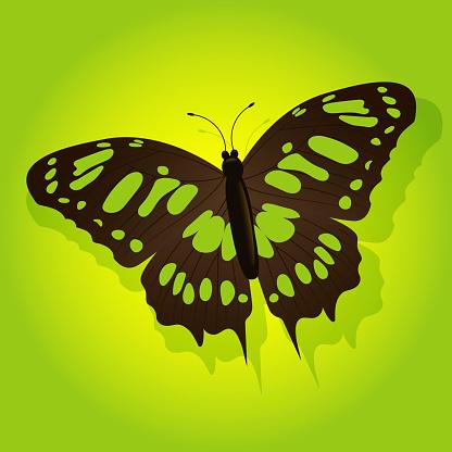 나비 일러스트
