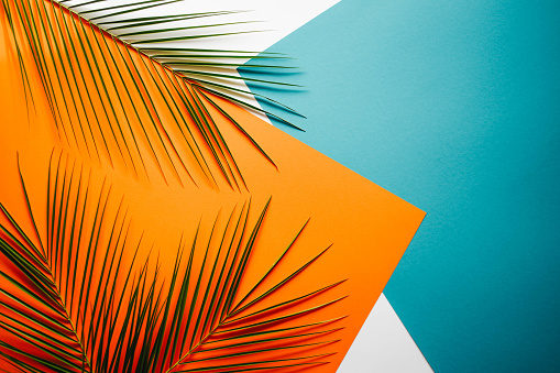 Background with palm branches