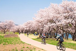 벚꽃 봄마중