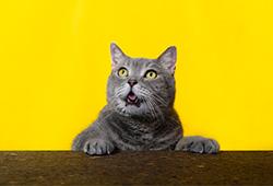 해외사진_Obeze cat series at home