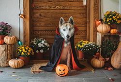 해외사진_Halloween ghost dog